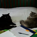 My editing cats